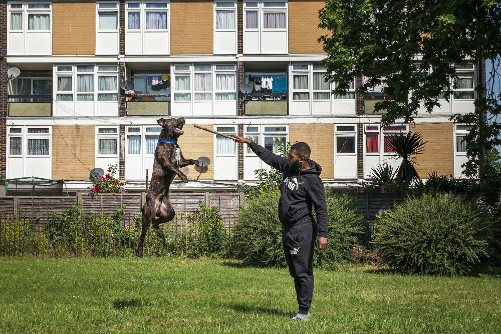 Youth Violence in London
